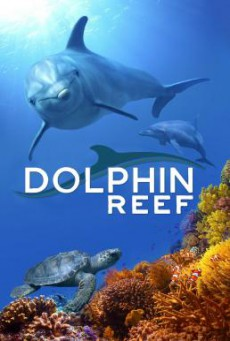 Dolphin Reef (2020) Disney+ บรรยายไทย (Exclusive @ FWIPTV)