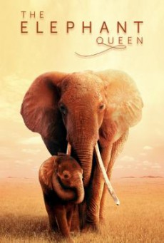 The Elephant Queen (2019) บรรยายไทย